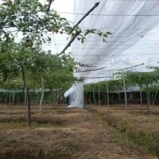 Cách làm nhà lưới trồng táo