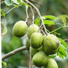 9 loại cây ăn quả có thể trồng trong chậu ngay tại nhà phố