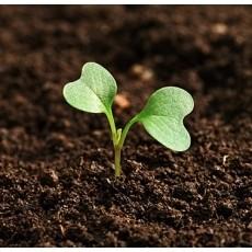 Để chọn được hạt giống thủy canh tốt cần  hiểu về chúng