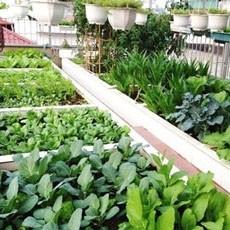 Trước khi trồng rau sạch bạn cần phải biết những điều này