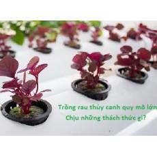 Những trăn trở cho doanh nghiệp trồng rau thủy canh quy mô lớn
