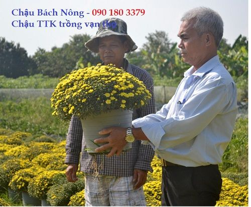 Chậu nhựa trồng hoa ttk