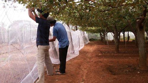 Thi công nhà lưới trồng cây táo