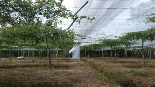 Cách làm nhà lưới trùm táo