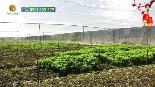 LƯỚI 20 MESH sử dụng cho vườn rau