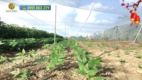 Lưới chắn côn trùng 20 mesh sử dụng cho vườn rau