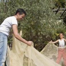Trùm lưới bảo vệ cây ăn quả