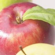 Cách trồng táo mà không cần hóa chất