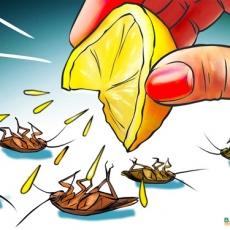Cách diệt sâu bọ bằng nước chanh
