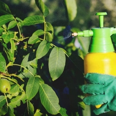 Thuốc trừ sâu hữu cơ là gì và thuốc trừ sâu hữu cơ có an toàn để sử dụng không