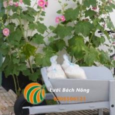 Cách sử dụng muối để diệt cỏ dại - Công thức diệt cỏ hiệu quả nhất