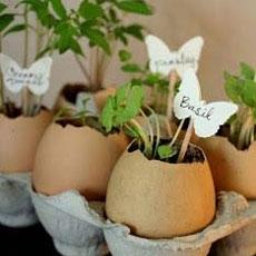 7 Vật dụng hữu ích có thể dùng để ươm hạt giống rau sạch