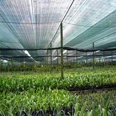 Đôi điều về lưới che nắng cho lan