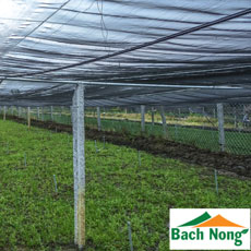 Lý giải vì sao mô hình nhà lưới trồng rau sạch giá rẻ lại được ưa chuộng