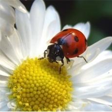 Thu hút côn trùng có lợi theo cách này thật đơn giản mà hiệu quả