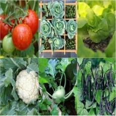 Hướng dẫn trồng rau củ đúng mùa vụ
