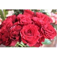 Công dụng của các loại hoa với sức khỏe