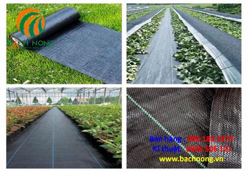Bạt phủ đất diệt cỏ có thể sử dụng cho nhiều loại cây trồng