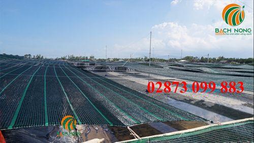 Lưới che nắng sử dụng choao tôm