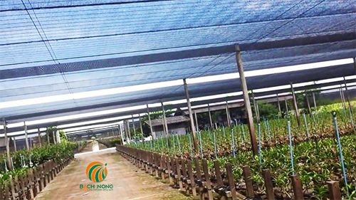 Lưới che nắng giá rẻ cho vườn lan