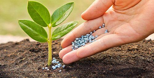 Chất lượng phân bón là yếu tố quyết định sự phát triển của cây trồng