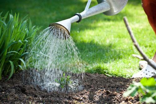 Bạn phải chú ý đến việc tưới nước cho vườn rau của mình