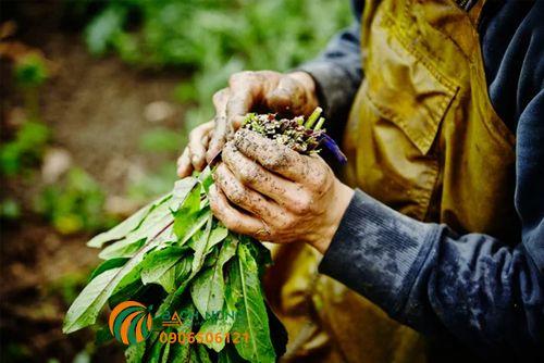 Cách tự chế thuốc trừ sâu hữu cơ