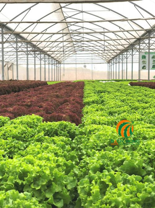Trồng rau ăn lá an toàn hơn trong nhà lưới