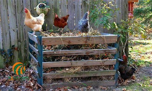 Phân gà tốt nhất nên dùng loại khô và ủ hoai mục